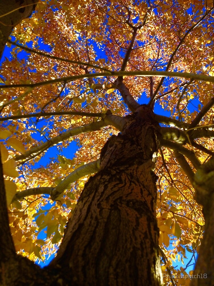 Autumn sky, squirrels view by Phatcatpatch18