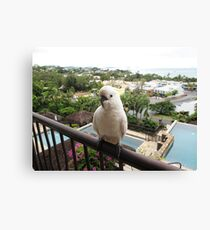Have a good day from cockatoo... Canvas Print