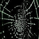 Web by Minna  Waring