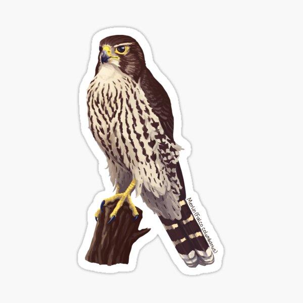 Merlin - Falco columbarius Sticker