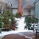 Winter Garden by Ned Elliott