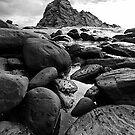 Barnacles by John Pitman