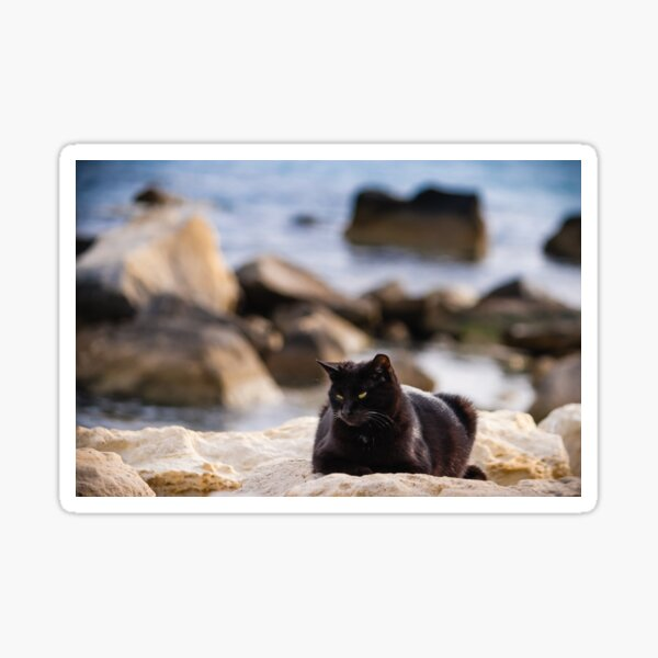 Black Cat On The Rocks By The Sea  Sticker
