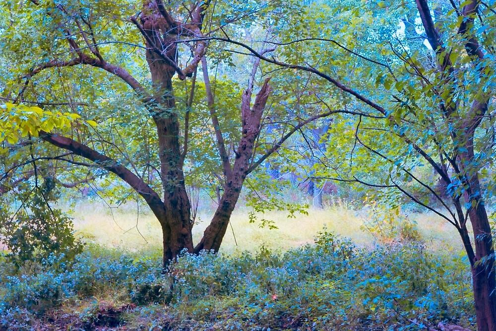 Forgotten Day Dreams by John Rivera