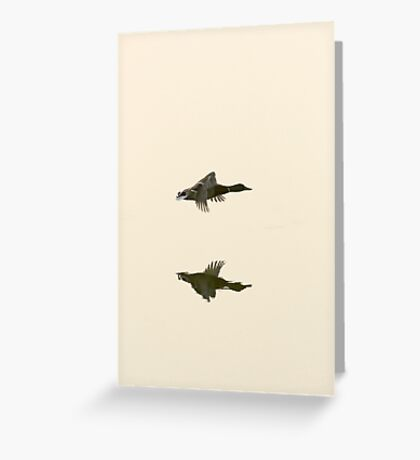Duck, flying solo Greeting Card