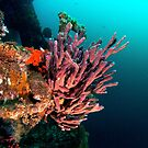 Sponge, HMAS Perth by Jamie Kiddle