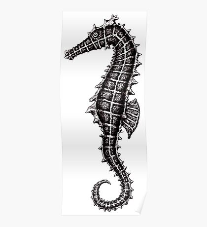 Seahorse black and white pen ink drawing Poster