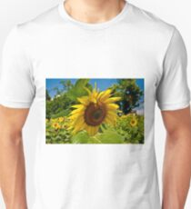 Sunflowers 2010 T-Shirt