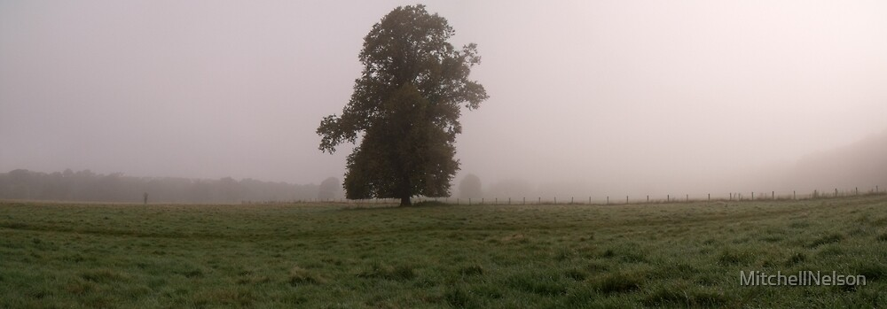 Foggy Field 2  by MitchellNelson
