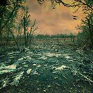 Icy pond by Elisabeth Ansley