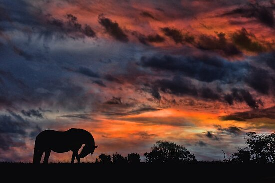Country Sunrise by Stephanie Laird