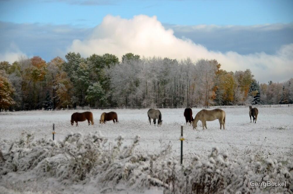 Horses in the snow by GerryBuckel