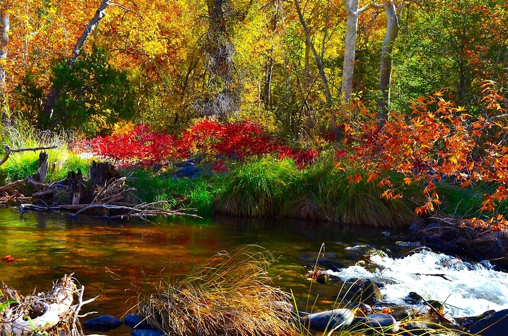 Fall At The Creek by Gina Dazzo
