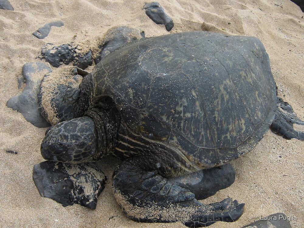 Tortoise on Maui by Laura Puglia