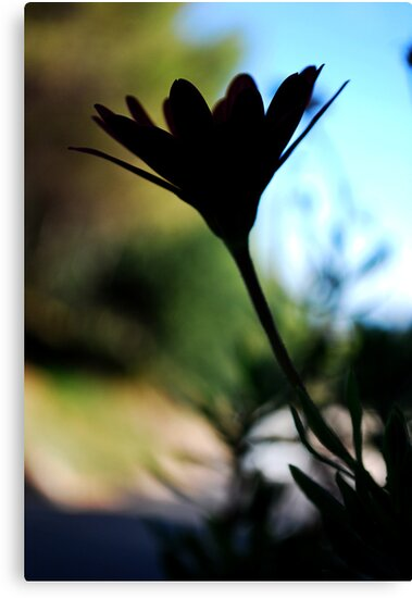 Flower silhouette by Kate Fortune