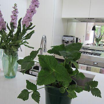 Clear and free kitchen with Japanese herbs by CeciMacaulay