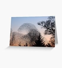 Murmuration of Starlings 3 at Gretna Greeting Card