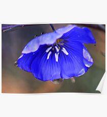 Blue Flax Umbrella Poster