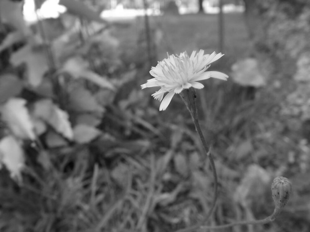 black and white flower by seavilleneuve