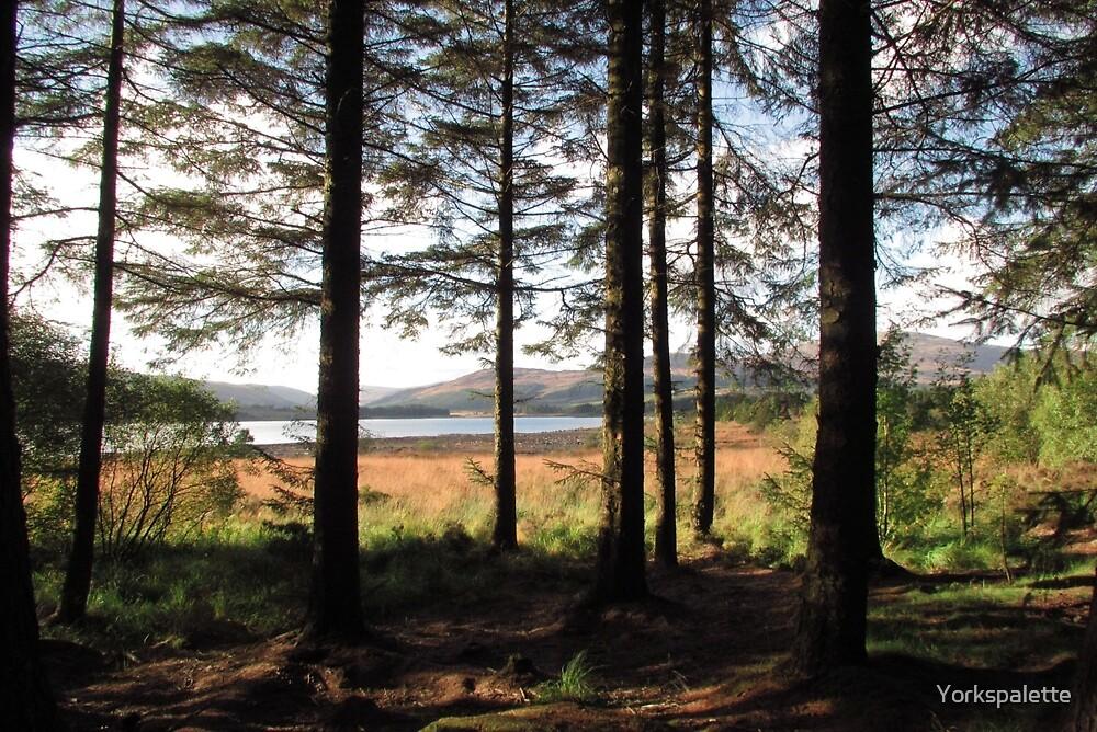 Forest glade by Yorkspalette