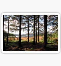 Forest glade Sticker