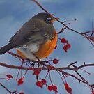 Rockin' Robin by Arla M. Ruggles