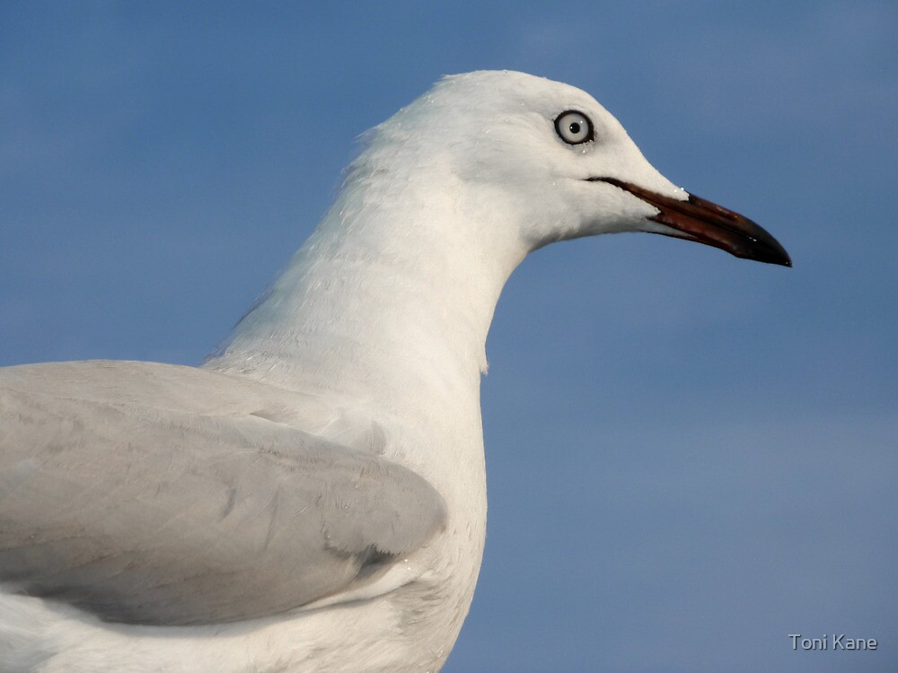 Seagull Series ~ See I Not Squark, I Patient, Now Give Me Rewards..*NOW* by Toni Kane