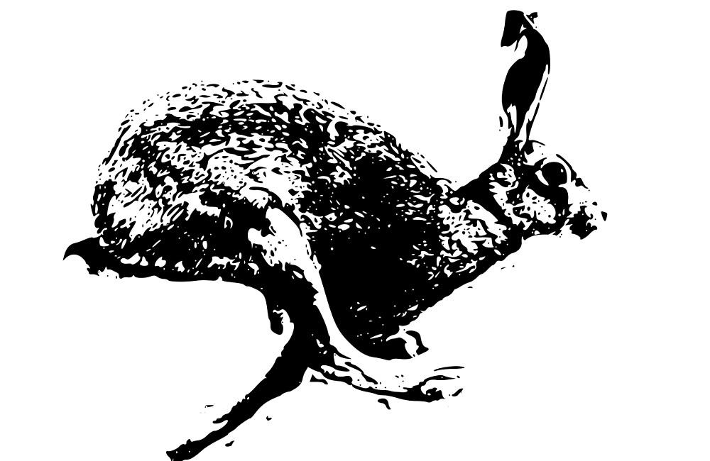 bounding hare white by izzykjb