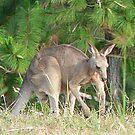 Kangaroo by Eeva47