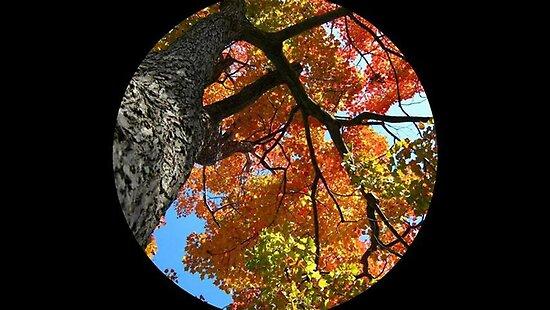 WeatherDon2.com Art 67 by dge357