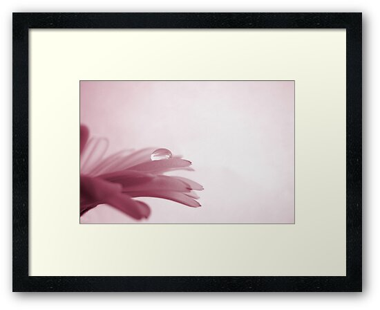 Pink-tinted Dreams by Tracy Friesen