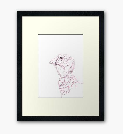 Norfolk Black Turkey (domestic breed) Framed Print