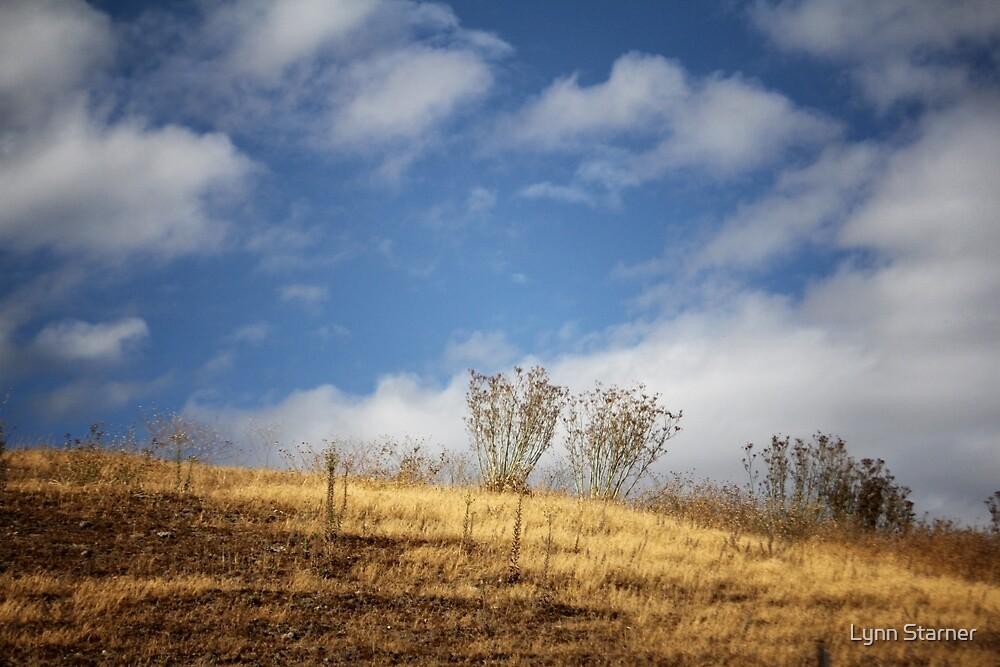 Golden Hill by Lynn Starner