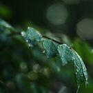 Dark green  by photographyjen