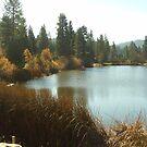 Grass Valley Lake In The San Bernardno Mountains by Bearie23