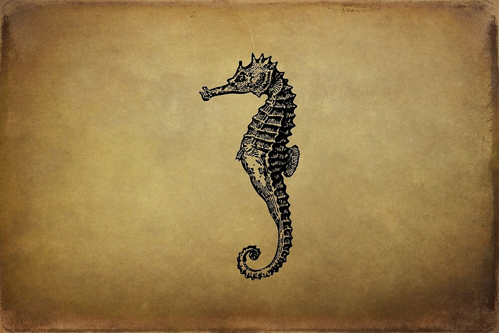 Vintage Seahorse Illustration by Peggy Collins