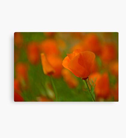 Poppy Art Canvas Print