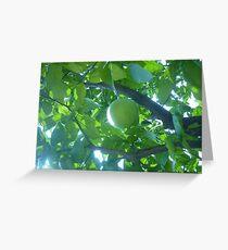 Sunlight streaking through to Caress a Fruit Greeting Card