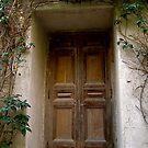 Vine, Capri by Barbara Wyeth