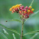 Wild Flower by nicib83