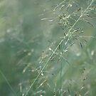 Baby Grass  by nicib83