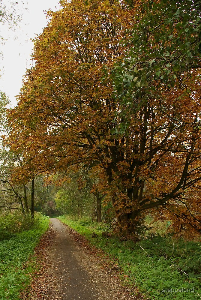 Path underneath the giant chestnut by steppeland