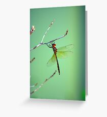 the beauty of wings Greeting Card