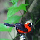 Unknow Bird - Singapore. by Ralph de Zilva