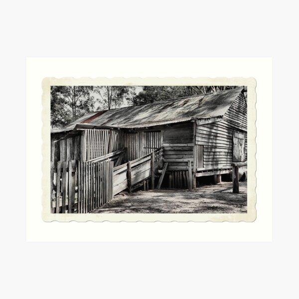 The Shearing Shed - Australiana Pioneer Village Wilberforce NSW Australia Art Print
