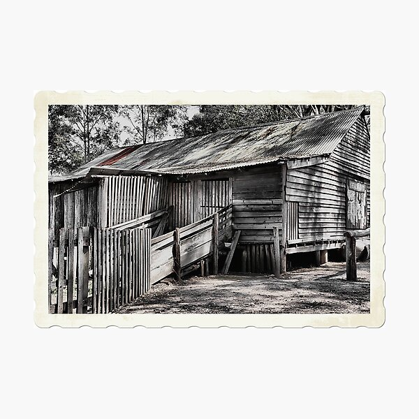 The Shearing Shed - Australiana Pioneer Village Wilberforce NSW Australia Photographic Print