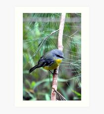 Eastern Yellow Robin Art Print