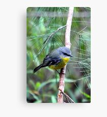 Eastern Yellow Robin Canvas Print