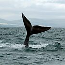 whale tail 1 by shaft77