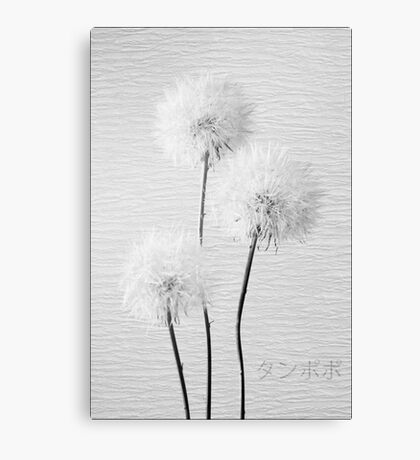 Dandelion in black & white Canvas Print